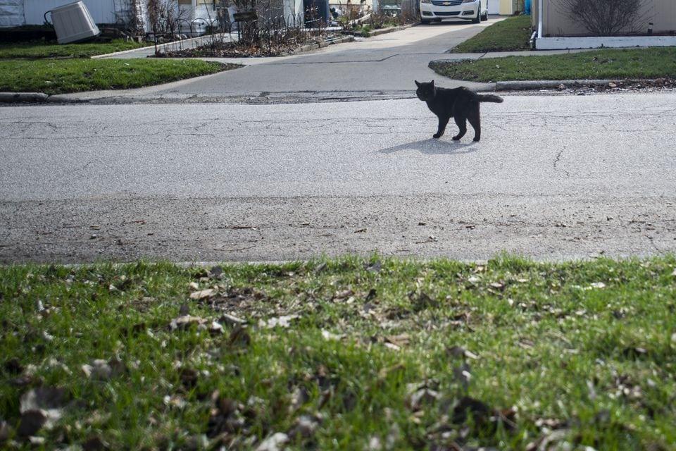 vcdync2bkzfohmlsncpxpxvk64 - «Кладбище домашних животных» в реальном мире: парень похоронил кота, а утром тот вернулся домой