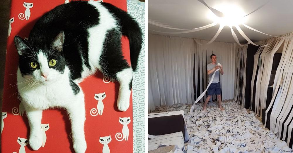 Хозяева сделали коту игровую комнату из сотни рулонов туалетной бумаги, и это настоящий кошачий рай