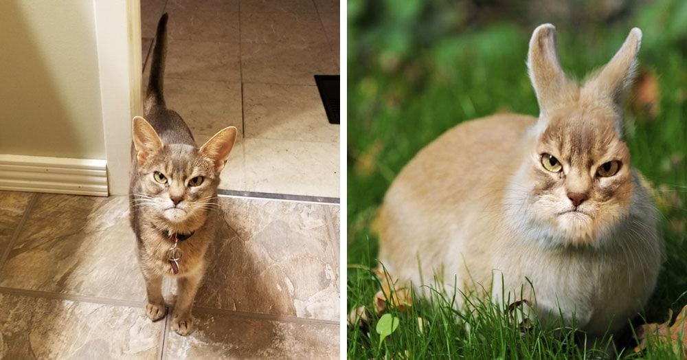 Кот состроил суровую морду и стал героем фотошоп-битвы. Пользователи сети оторвались по полной