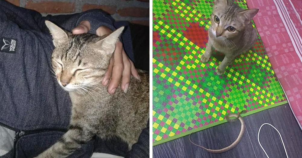 Котёнок перегрыз  провод от наушников своего хозяина, но осознал вину и решил принести замену. Змею
