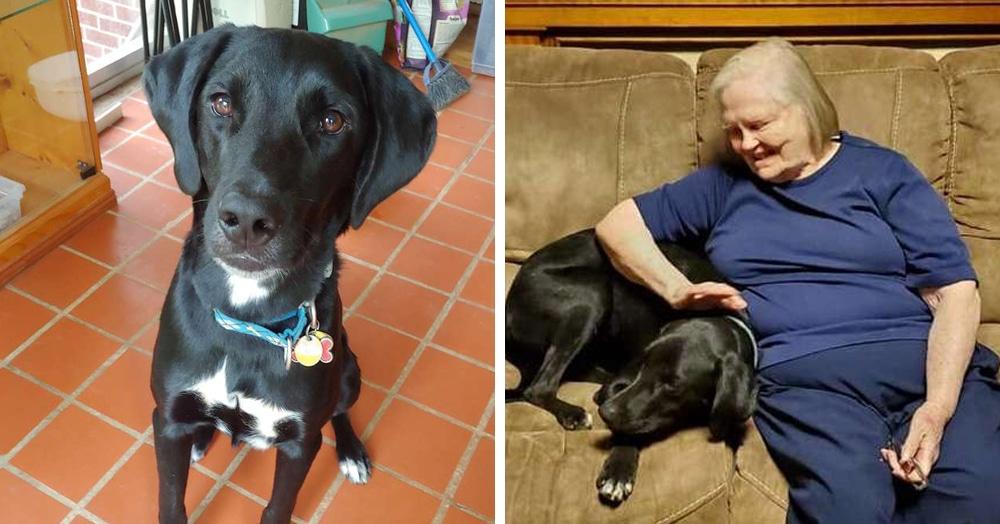 Бабушка была против пса, которого приютила внучка. Но он доказал свою преданность и спас ей жизнь