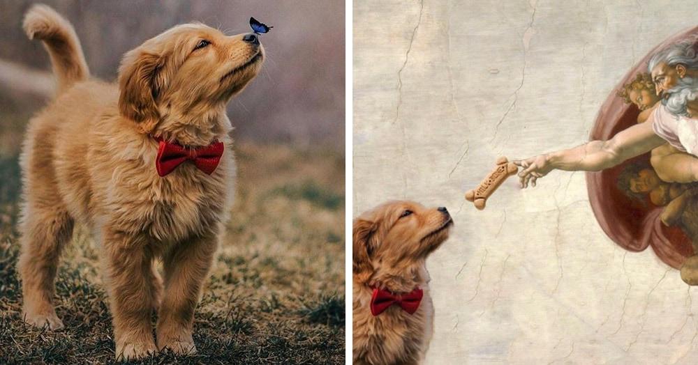 Бабочка села на нос пса с красной бабочкой, и этот кадр дал начало неожиданно доброму фотошоп-баттлу
