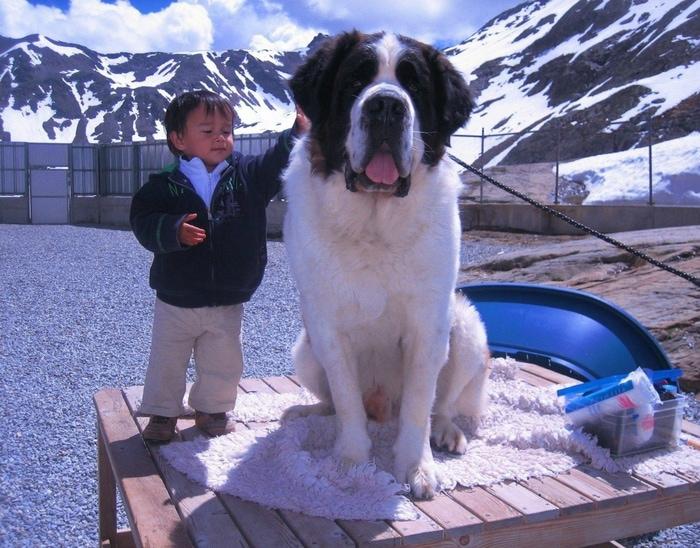 105569438 vhcorego5t - 18 фотографий животных, которые на своём примере показывают, что размеры познаются в сравнении