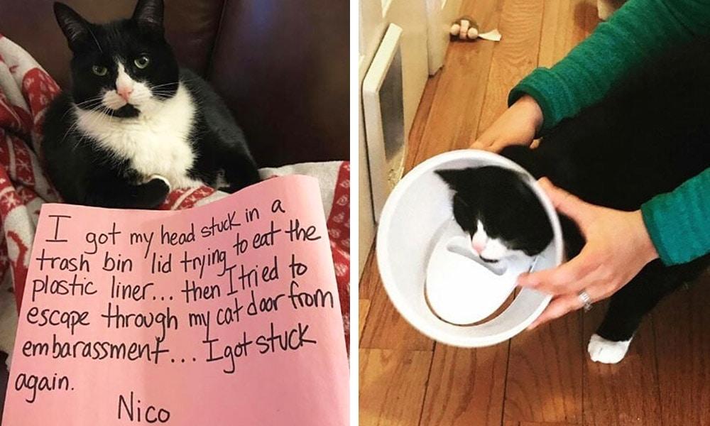 12 6 - Пользователи сети, ставшие жертвами кошачьей тирании, делятся ужасающими кадрами своей тяжёлой жизни