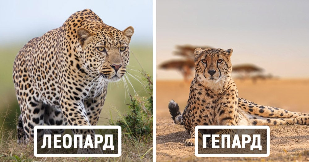 Тест: Сможете ли вы правильно назвать животных, которых постоянно путают?