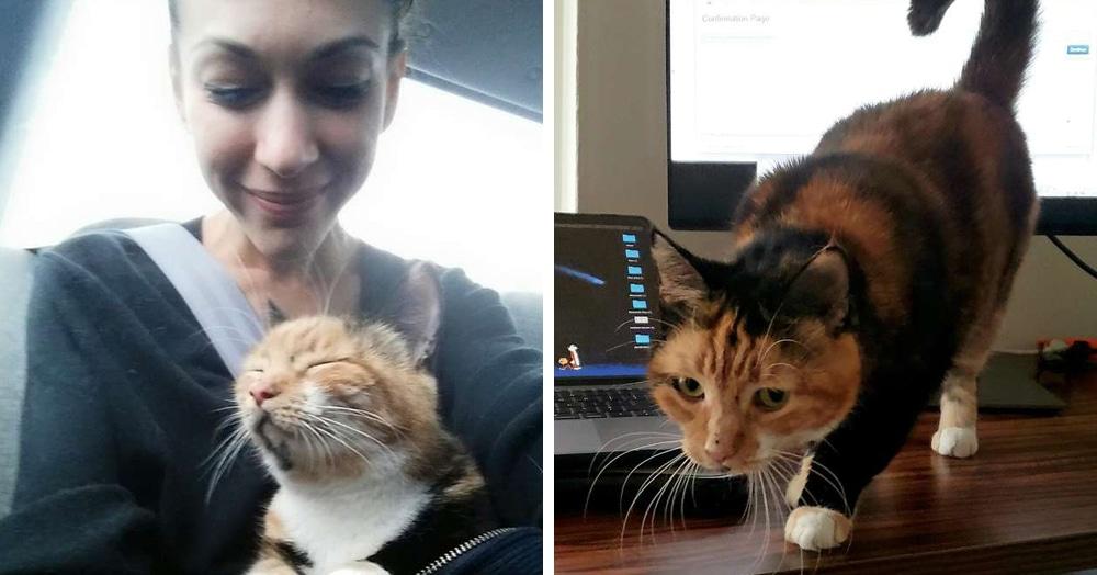 Кошка прилегла на ноутбук, «что-то нажала, и всё исчезло». А хозяйка благодаря ей получила грант