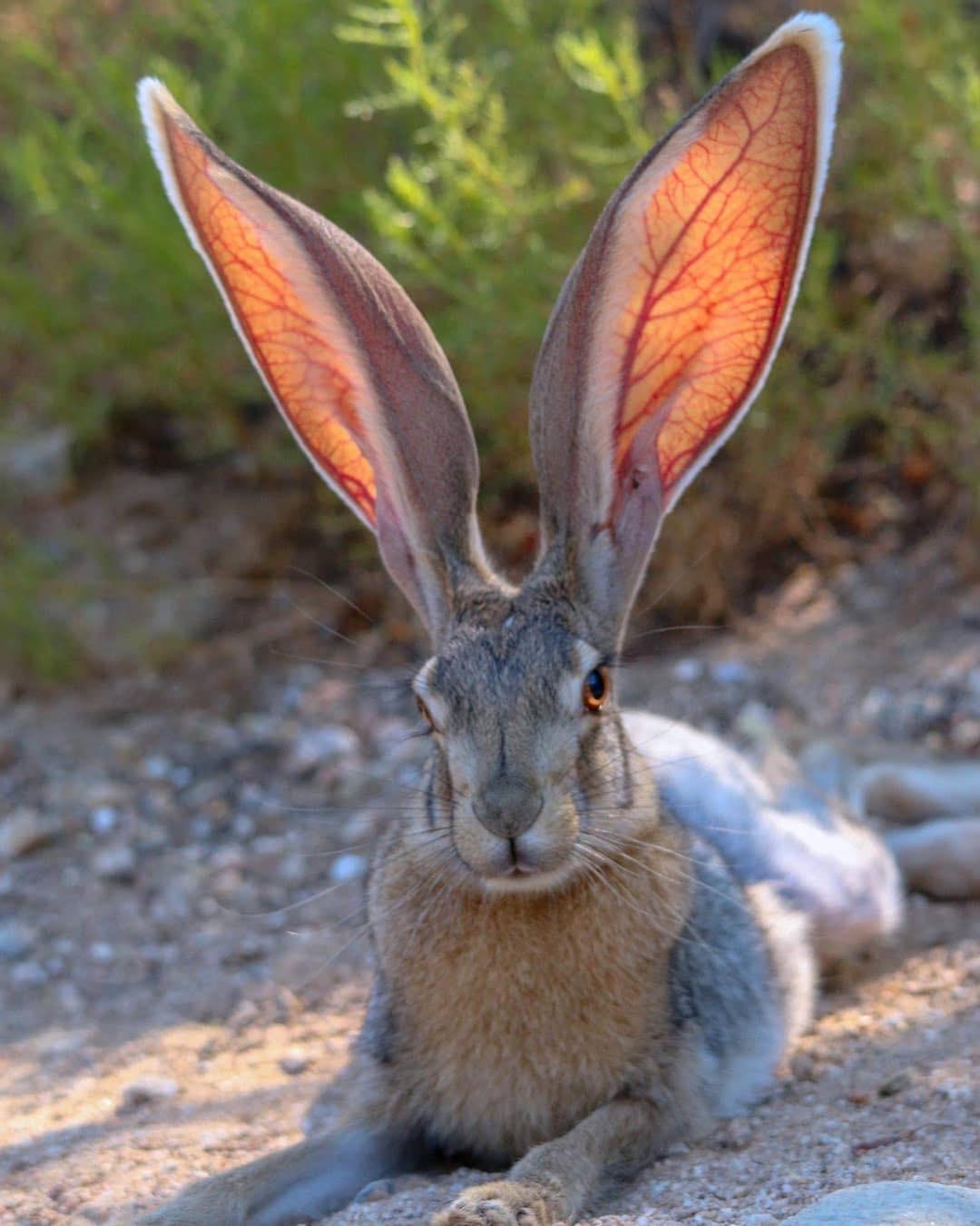 290yzwwelot21 - 18 фотографий животных, которые на своём примере показывают, что размеры познаются в сравнении