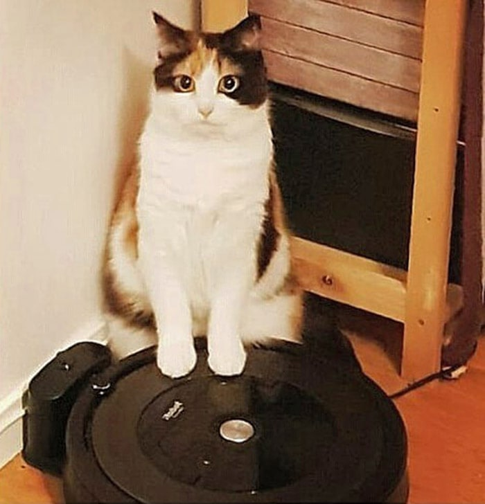 46919905 385527355565882 550183405897284958 n - Пользователи сети, ставшие жертвами кошачьей тирании, делятся ужасающими кадрами своей тяжёлой жизни