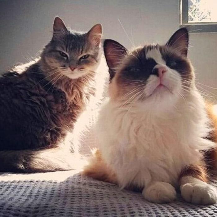 47248492 189811335304565 2246636393590542048 n - Пользователи сети, ставшие жертвами кошачьей тирании, делятся ужасающими кадрами своей тяжёлой жизни