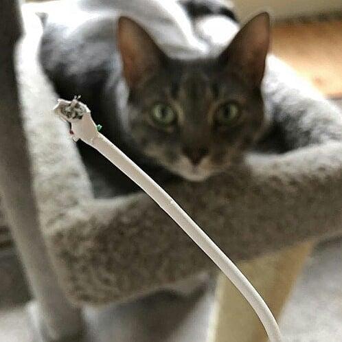 51548246 1172333752929336 1533062183028530242 n - Пользователи сети, ставшие жертвами кошачьей тирании, делятся ужасающими кадрами своей тяжёлой жизни