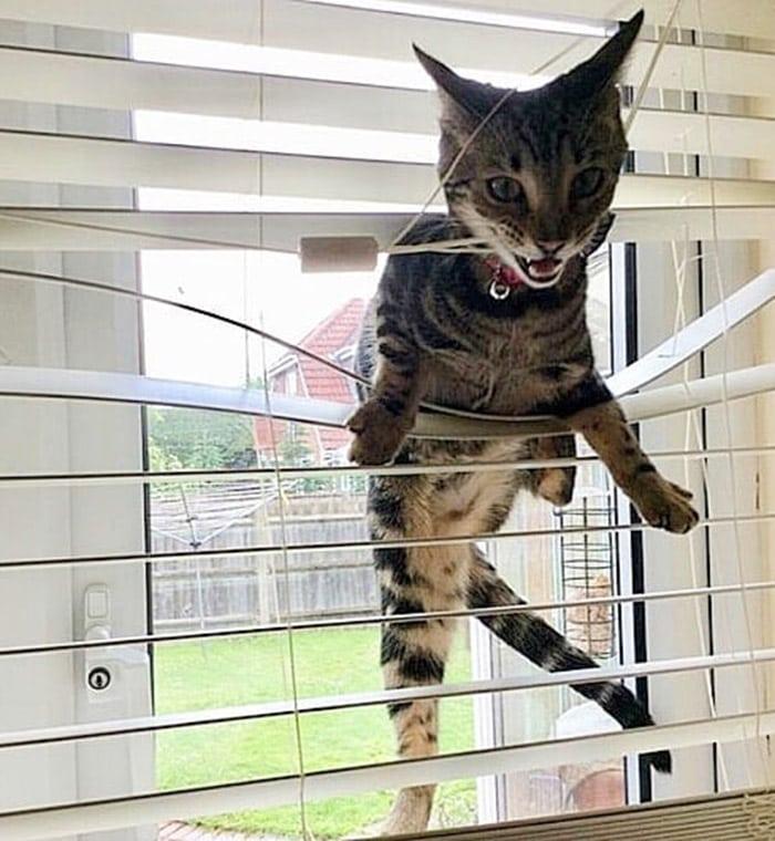 52717598 2352688861449689 8508804949951321377 n - Пользователи сети, ставшие жертвами кошачьей тирании, делятся ужасающими кадрами своей тяжёлой жизни