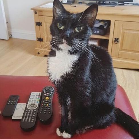 53345482 362448691264352 734996315412098258 n - Пользователи сети, ставшие жертвами кошачьей тирании, делятся ужасающими кадрами своей тяжёлой жизни