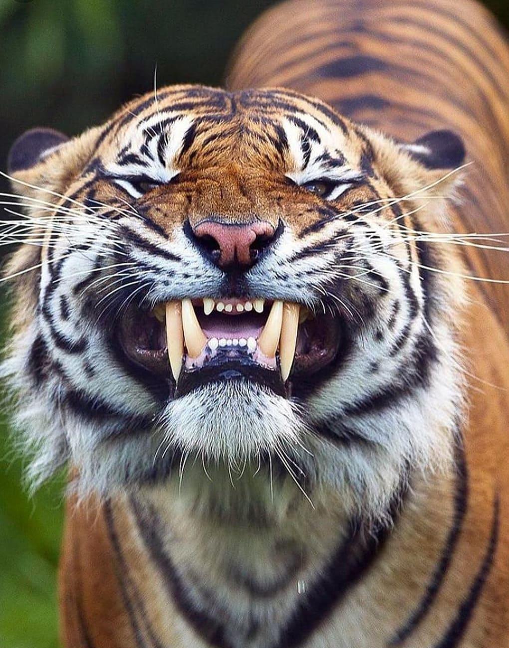 56428398 132966497842685 5784281738875622004 n - 18 фотографий животных, которые на своём примере показывают, что размеры познаются в сравнении