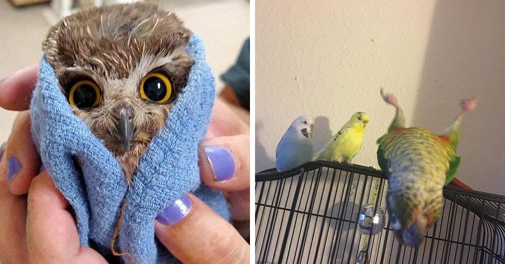20 случаев, когда птицы были смешнее и харизматичнее всех остальных существ вместе взятых