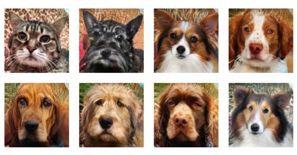Сайт примеряет питомцам другие породы и даже превращает кошку в собаку. Трюк работает и с людьми!
