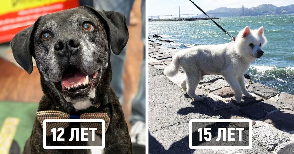 20 взрослых собак, которые тщательно скрывают свой возраст за горящими глазами и виляющим хвостом