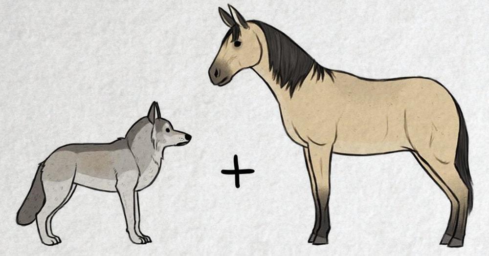 Волк + пухлый тролль: художник представил и нарисовал, как появились на свет разные породы собак