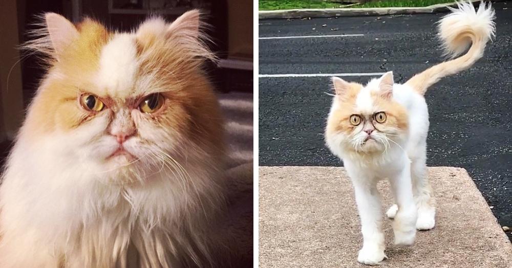 Кот по кличке Луи настолько суров, что выглядит как ненависть ко всему живому. Только с хвостиком