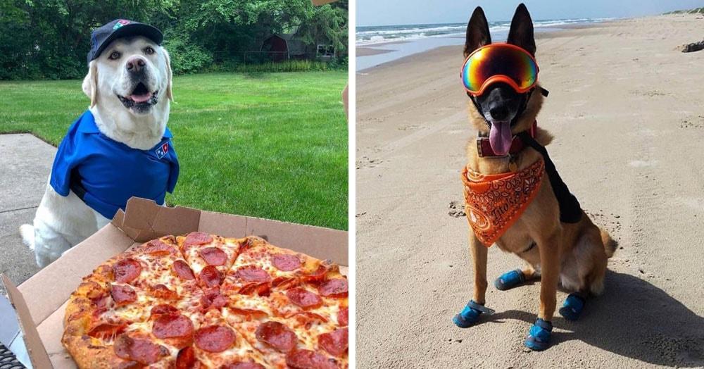 18 собак, которые устроились на работу и зарабатывают себе на корм самостоятельно