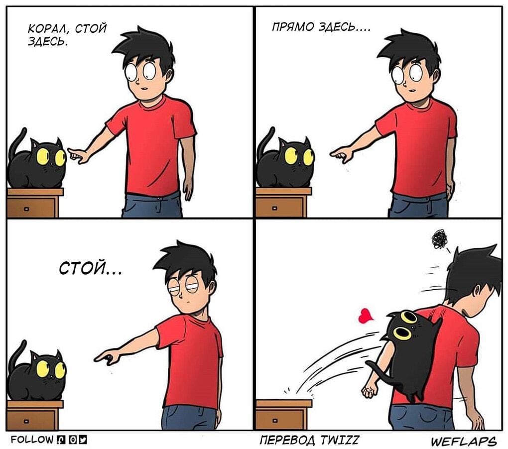 10 1 - 19 комиксов, которые демонстрируют, что жизнь с котом — это отдельная профессия