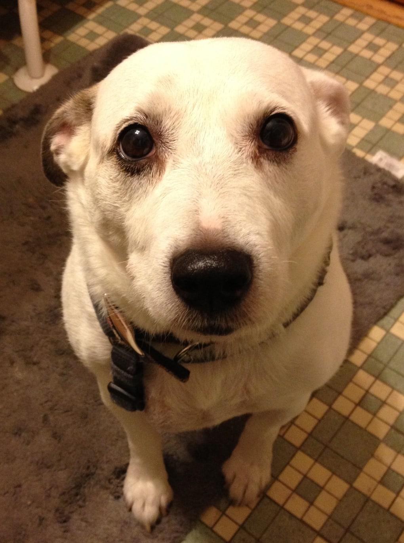 10kqvpd - Мужчина поделился трогательными фото своего пса, который каждый день ждал его у окна. Целых 11 лет