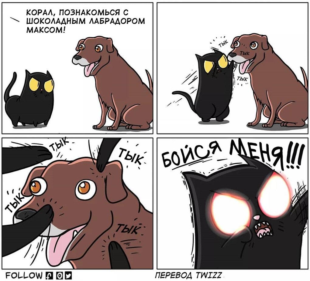 12 1 - 19 комиксов, которые демонстрируют, что жизнь с котом — это отдельная профессия