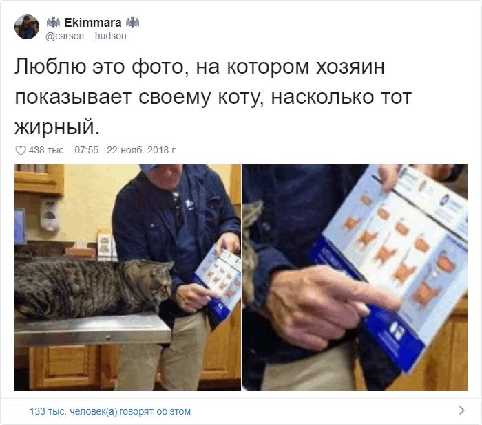 12 1 - 17 случаев, когда люди использовали свою фотокамеру во имя самого святого — котов