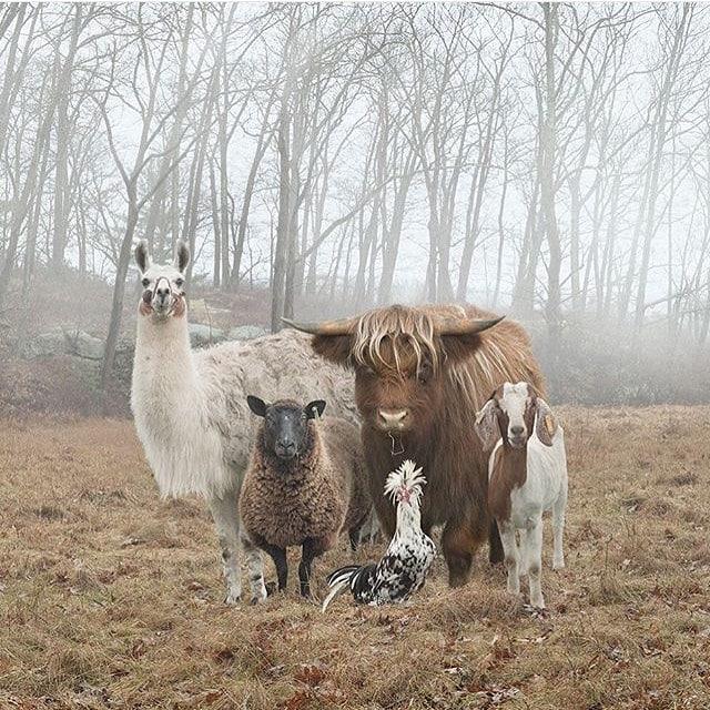 12716472 188312208202497 440202312 n - 16 животных, которые будто сами попросили, чтобы их сфоткали
