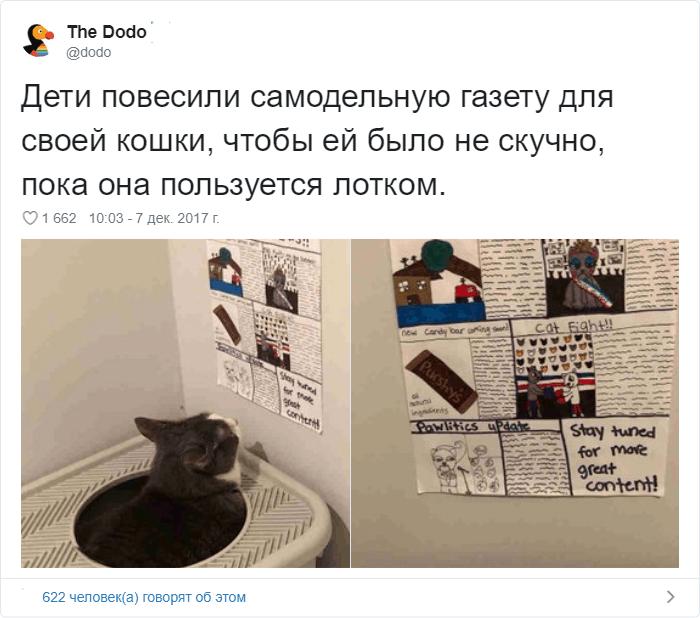 13 - 17 случаев, когда люди использовали свою фотокамеру во имя самого святого — котов
