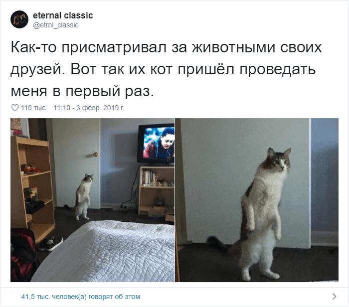 14 - 17 случаев, когда люди использовали свою фотокамеру во имя самого святого — котов