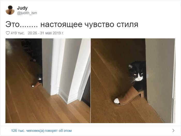 16 1 - 17 случаев, когда люди использовали свою фотокамеру во имя самого святого — котов
