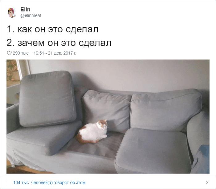 17 - 17 случаев, когда люди использовали свою фотокамеру во имя самого святого — котов