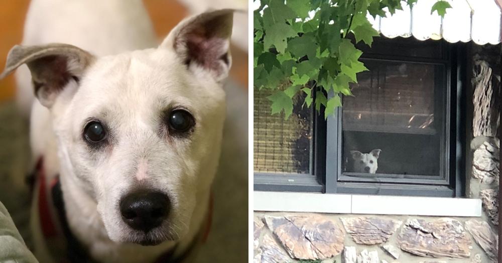 Мужчина поделился трогательными фото своего пса, который каждый день ждал его у окна. Целых 11 лет