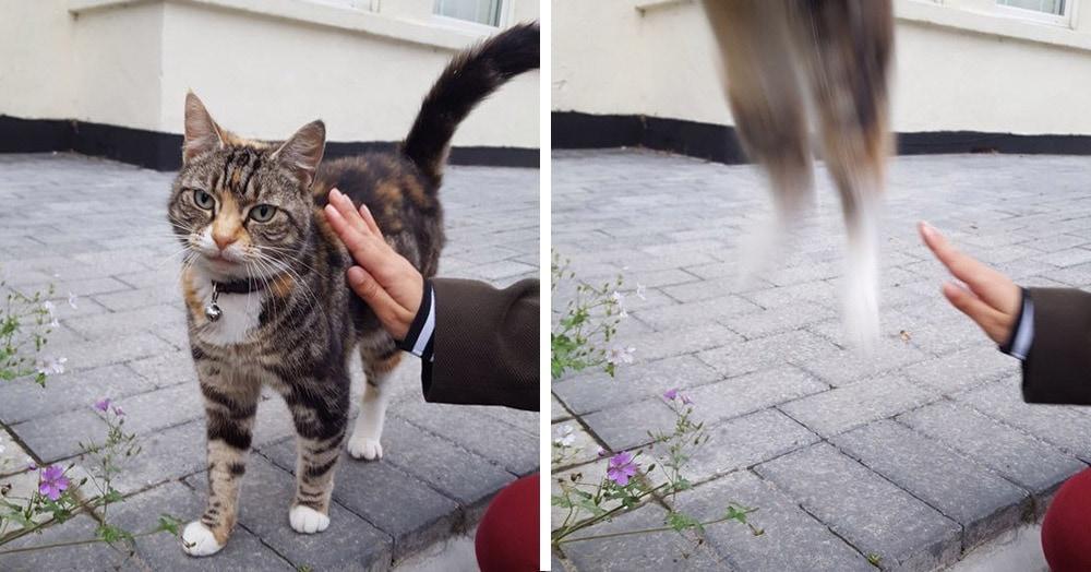 17 случаев, когда люди использовали свою фотокамеру во имя самого святого — котов