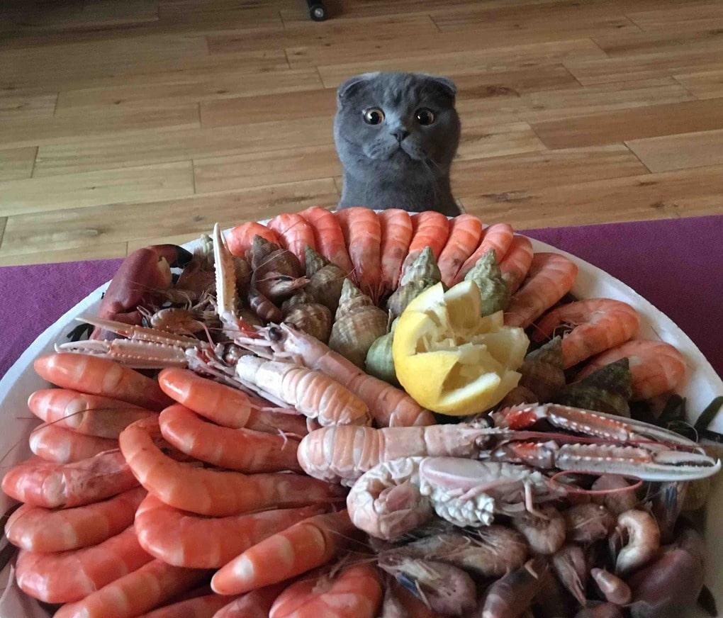 201604170007 limon uberite pozhaluysta kashamalasha com - 15 невероятно целеустремленных котов, которые готовы на всё во имя еды