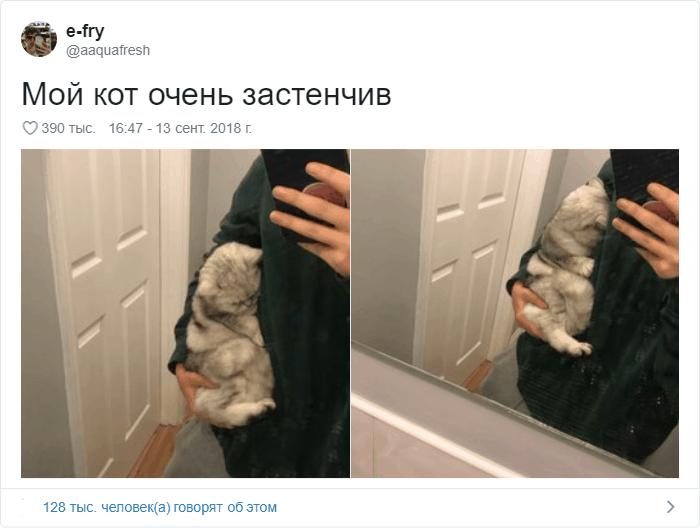 21 - 17 случаев, когда люди использовали свою фотокамеру во имя самого святого — котов