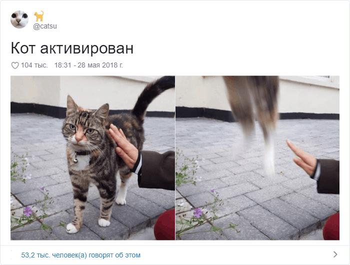 22 - 17 случаев, когда люди использовали свою фотокамеру во имя самого святого — котов