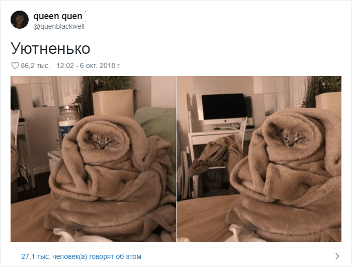 23 - 17 случаев, когда люди использовали свою фотокамеру во имя самого святого — котов