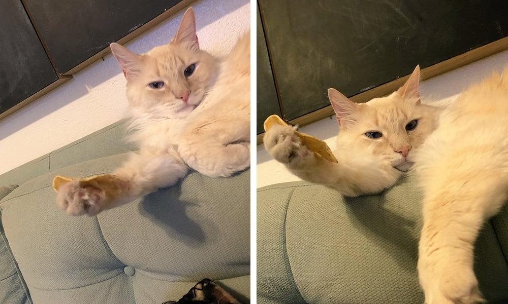 24 2 - 17 случаев, когда люди использовали свою фотокамеру во имя самого святого — котов