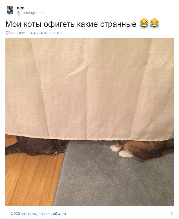 25 - 17 случаев, когда люди использовали свою фотокамеру во имя самого святого — котов