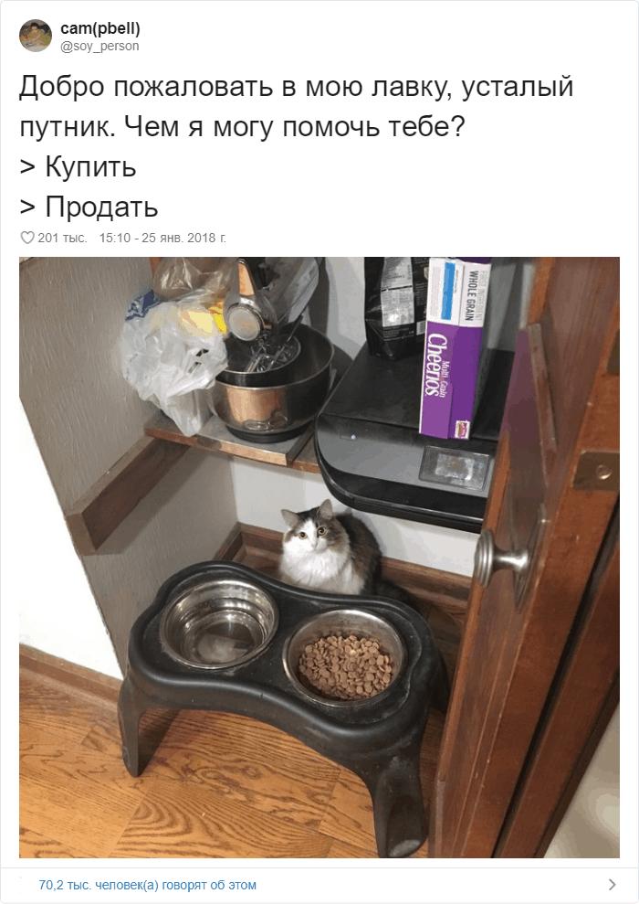 26 - 17 случаев, когда люди использовали свою фотокамеру во имя самого святого — котов