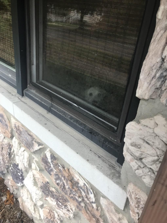 5or1al3 - Мужчина поделился трогательными фото своего пса, который каждый день ждал его у окна. Целых 11 лет