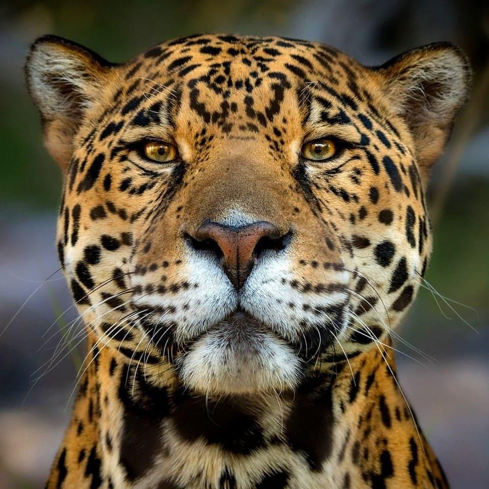 abeo5tt1djuvdp0tq5vmm 8ucokh37eu3x2r7llekuc - 16 животных, которые будто сами попросили, чтобы их сфоткали