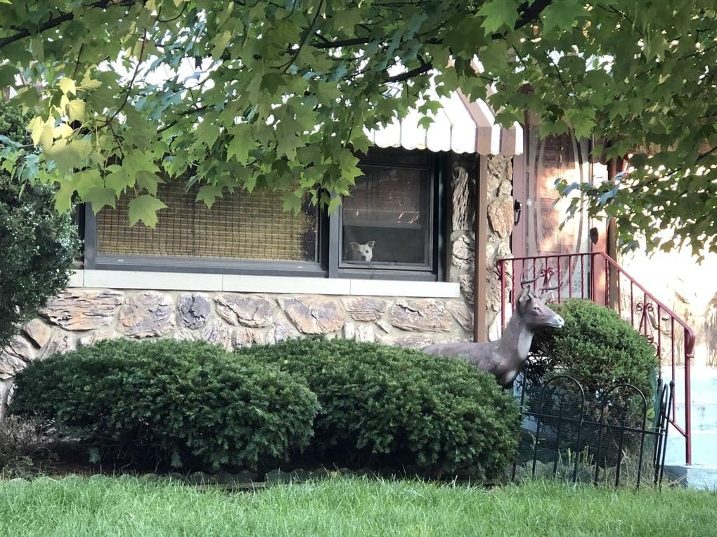 aolt9ij - Мужчина поделился трогательными фото своего пса, который каждый день ждал его у окна. Целых 11 лет