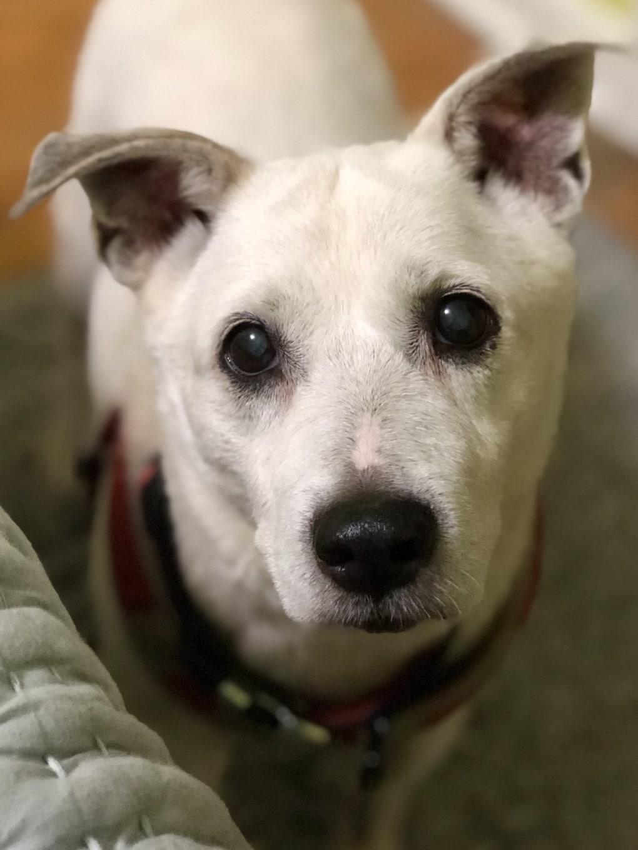 ax8ghci - Мужчина поделился трогательными фото своего пса, который каждый день ждал его у окна. Целых 11 лет