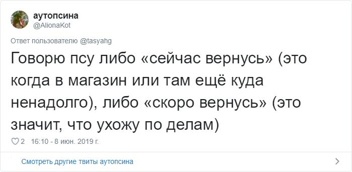 bez nazvaniya 23 2 - «Охраняй. Котов домой не води»: люди рассказывают, что говорят своим питомцам перед уходом из дома