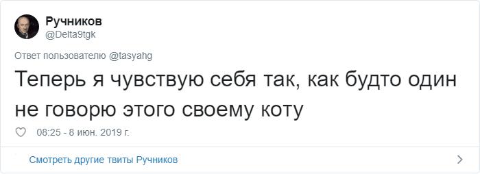 bez nazvaniya 36 - «Охраняй. Котов домой не води»: люди рассказывают, что говорят своим питомцам перед уходом из дома