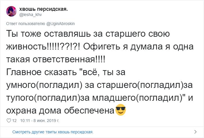 bez nazvaniya 4 2 - «Охраняй. Котов домой не води»: люди рассказывают, что говорят своим питомцам перед уходом из дома