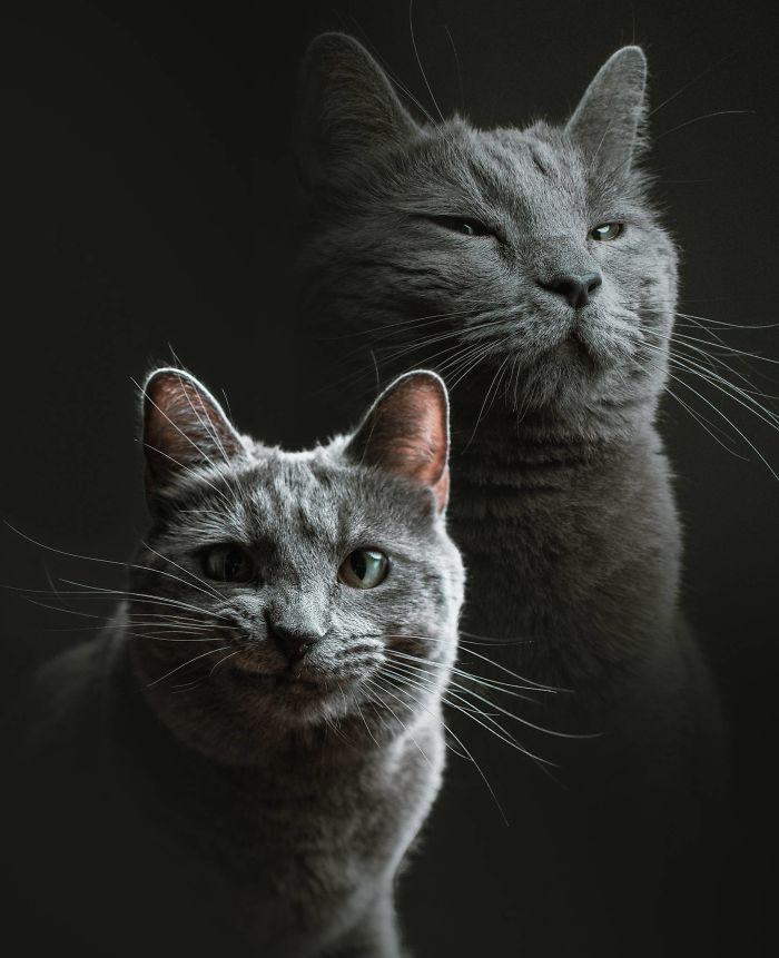 cat babysitter friend photoshoot 1 5d0348eaefc74  700 - Вот что бывает, когда на время оставляешь свою кошку у друга-фотографа