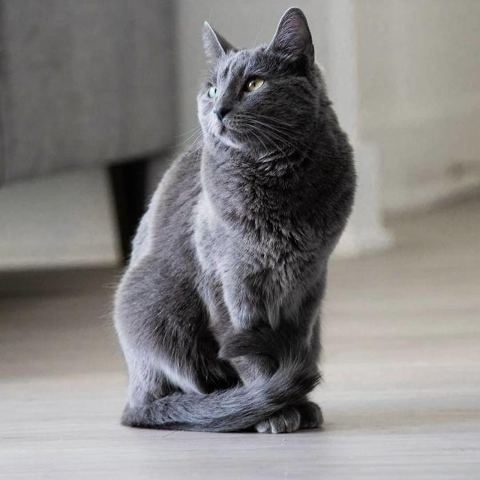 cat babysitter friend photoshoot 11 5d0349026d99f  700 - Вот что бывает, когда на время оставляешь свою кошку у друга-фотографа